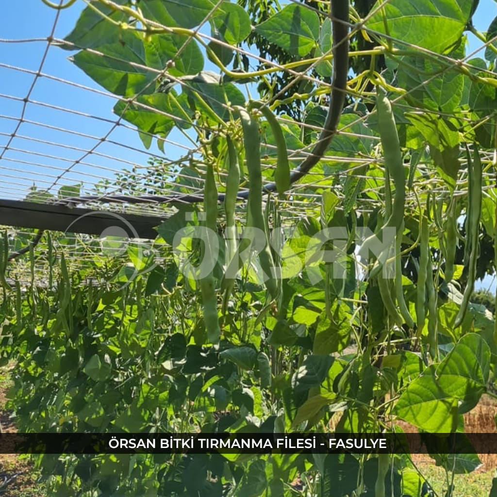 bitki tırmanma ağı