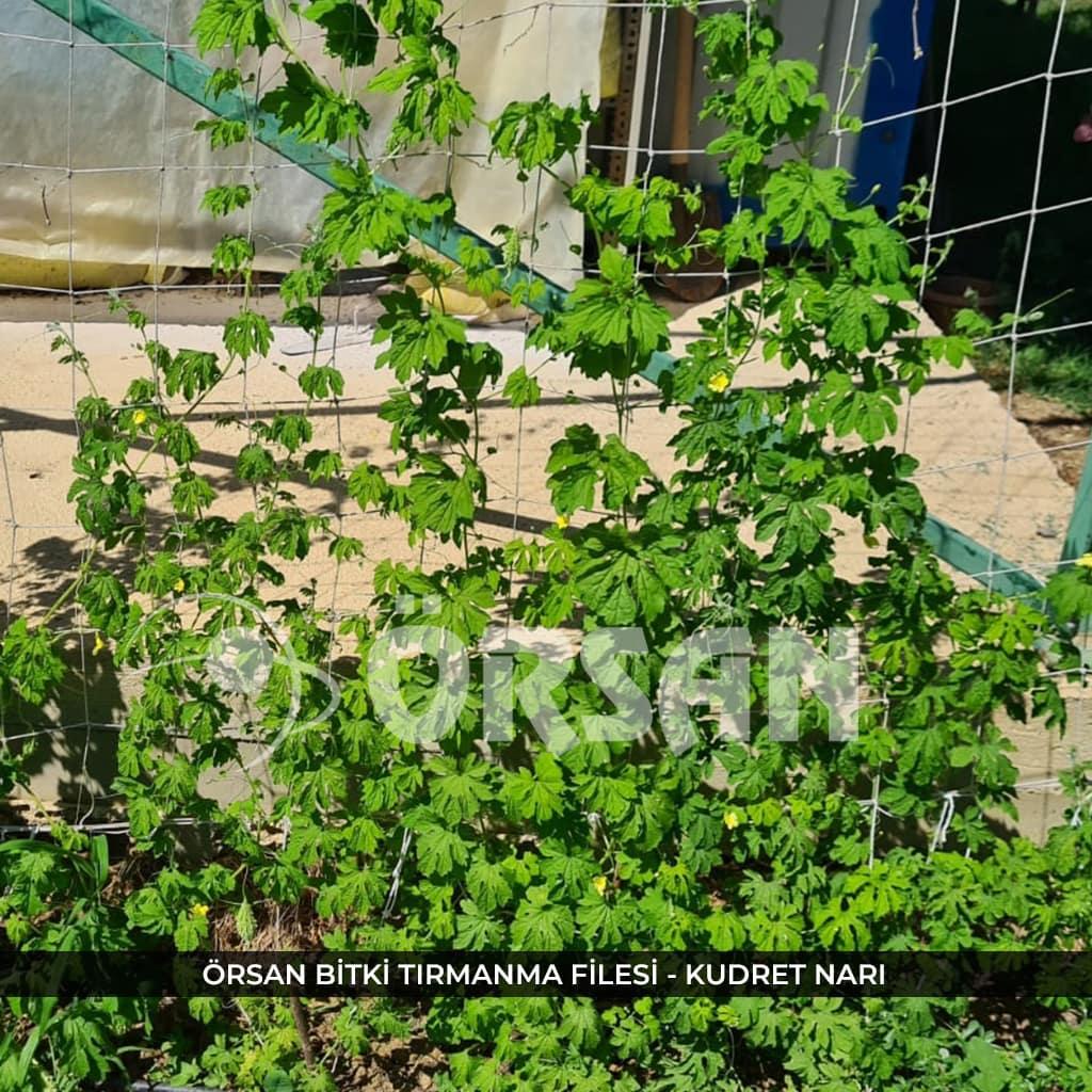 bitki tırmanma filesi örsan file